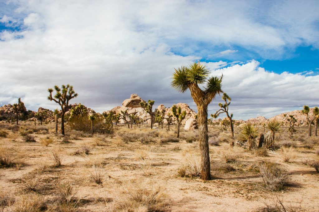 A shot of a possible wedding spot in Joshua Tree National Park